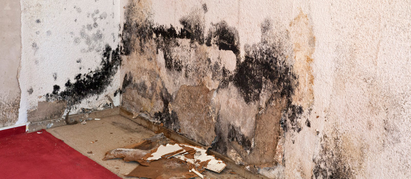 Mold Service in La Grange, Illinois